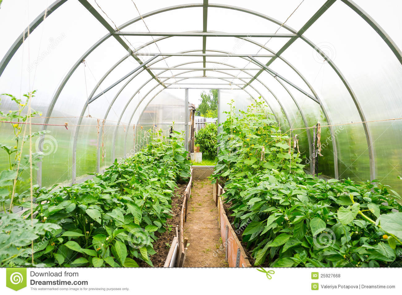 Plastic Covered Horticulture Greenhouse Royalty Free Stock Photos.