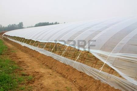 84 Plastic Greenhouse Stock Illustrations, Cliparts And Royalty.