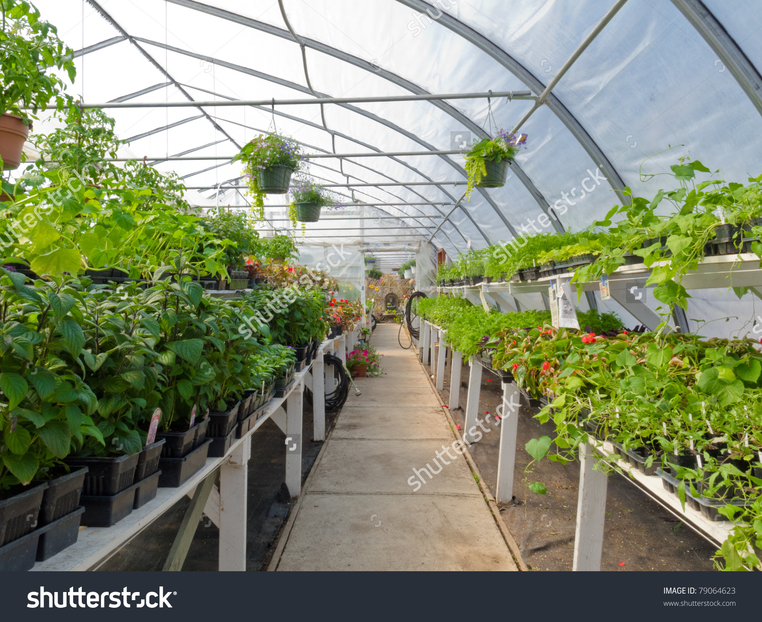 Inside Commercial Plastic Covered Horticulture Greenhouse Stock.