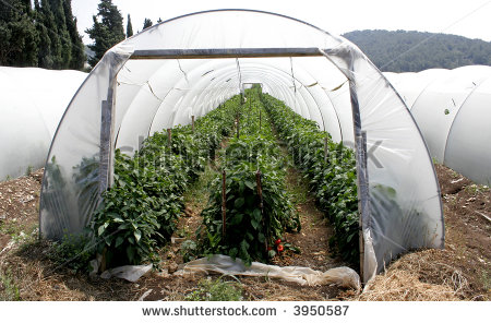 Plastic Greenhouse Stock Photos, Royalty.