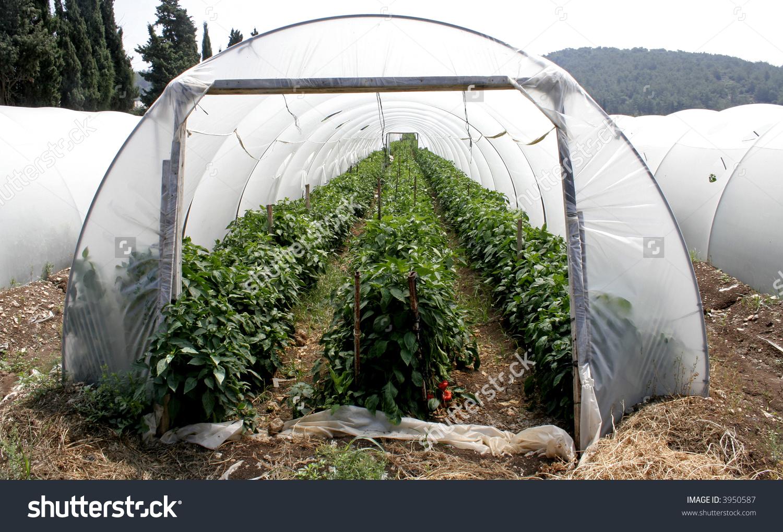 Tunnel Shaped Plastic Greenhouse Stock Photo 3950587.