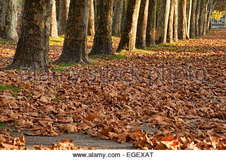 Autumn Leaf Illustration Stock Photo, Royalty Free Image: 31963249.
