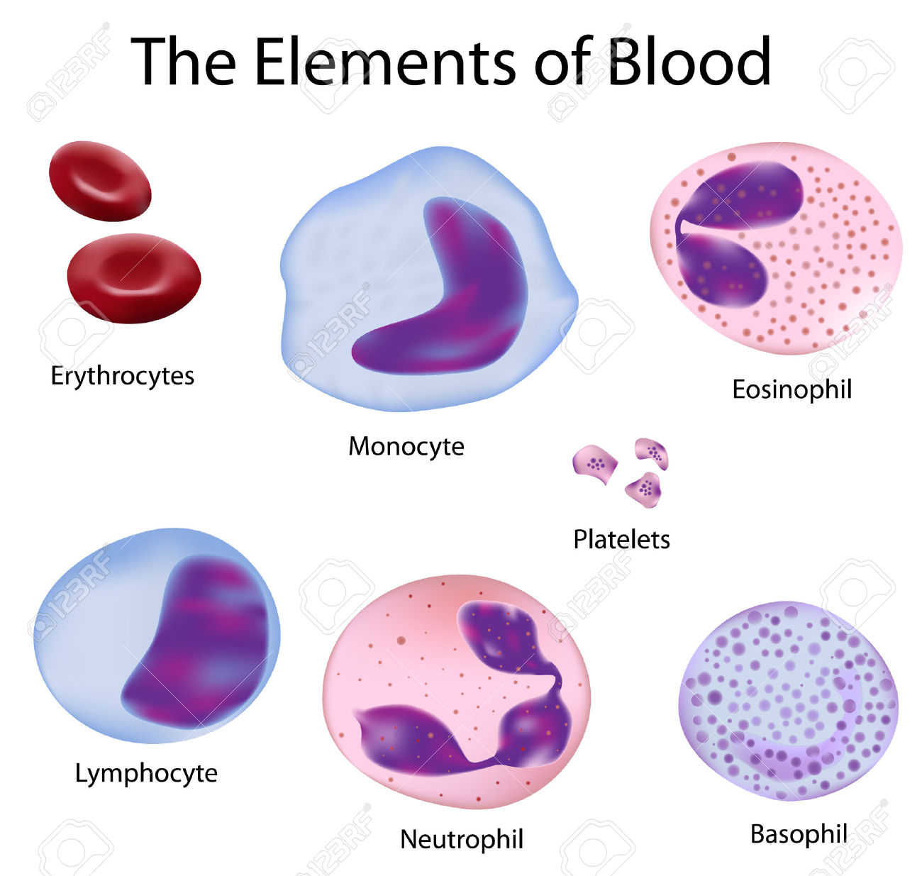 Platelet clipart - Clipground