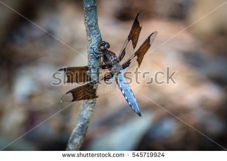 Up Close To Whitetail Stock Photos, Royalty.