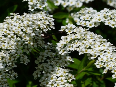 Panicles free stock photos download (27 Free stock photos) for.