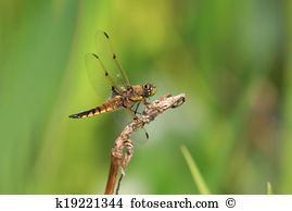 Libellula Images and Stock Photos. 408 libellula photography and.