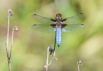 Photos, illustrations et vidéos de Catégorie : Animaux > Insectes.