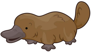 Free Platypus, Download Free Clip Art, Free Clip Art on.