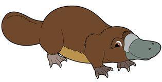 Cartoon Platypus.