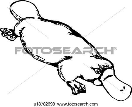 Platypus Clip Art Illustrations. 226 platypus clipart EPS vector.