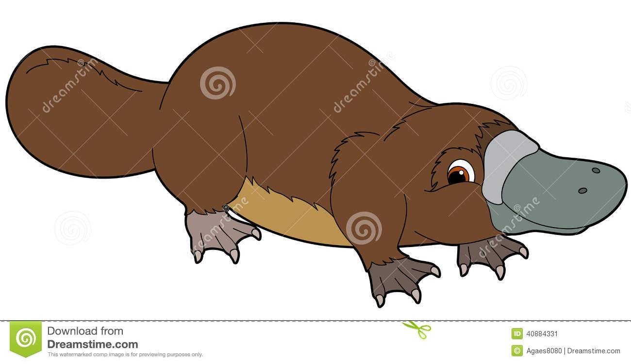 Platypus Stock Illustrations.