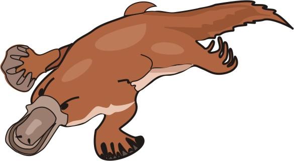 Platypus pictures cartoon free download clip art.