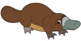 Platypus clipart 2.