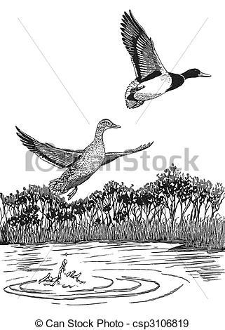 Stock Illustration of Mallard.