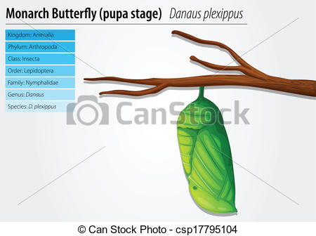 Vector Clipart of Monarch butterfly.