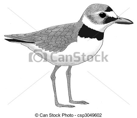 Plover Stock Illustrations. 70 Plover clip art images and royalty.