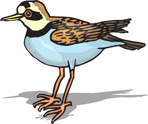 Plover Clip Art at Clker.com.