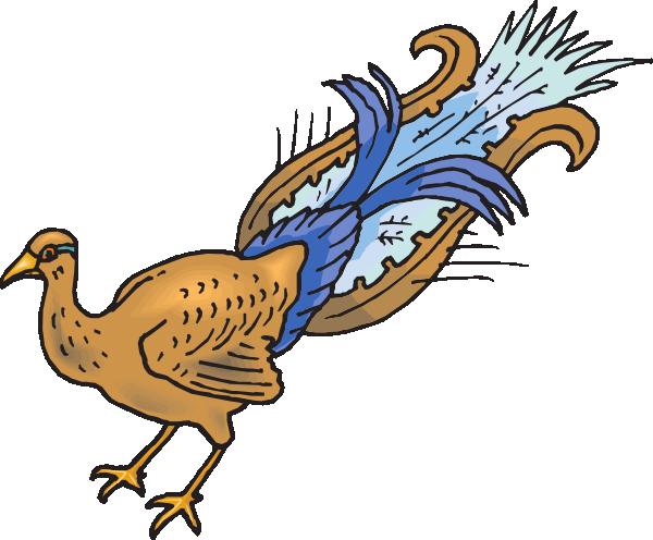Plucked Peacock Clip Art at Clker.com.