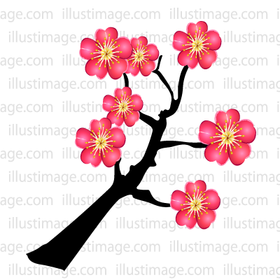Summary】Plum blossom Clipart & Graphics|Free Cripart & Graphics.