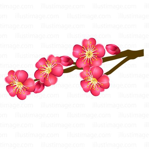 Summary】Plum blossom Clipart & Graphics|Free Cripart & Graphics.