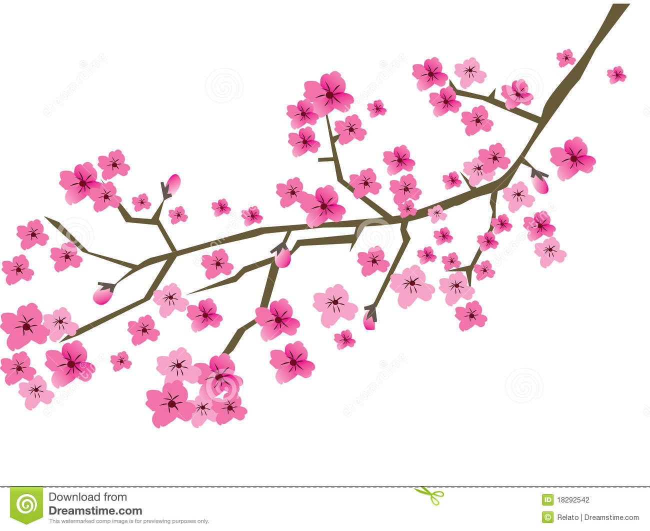 Plum Branch In Blossom Stock Photography.