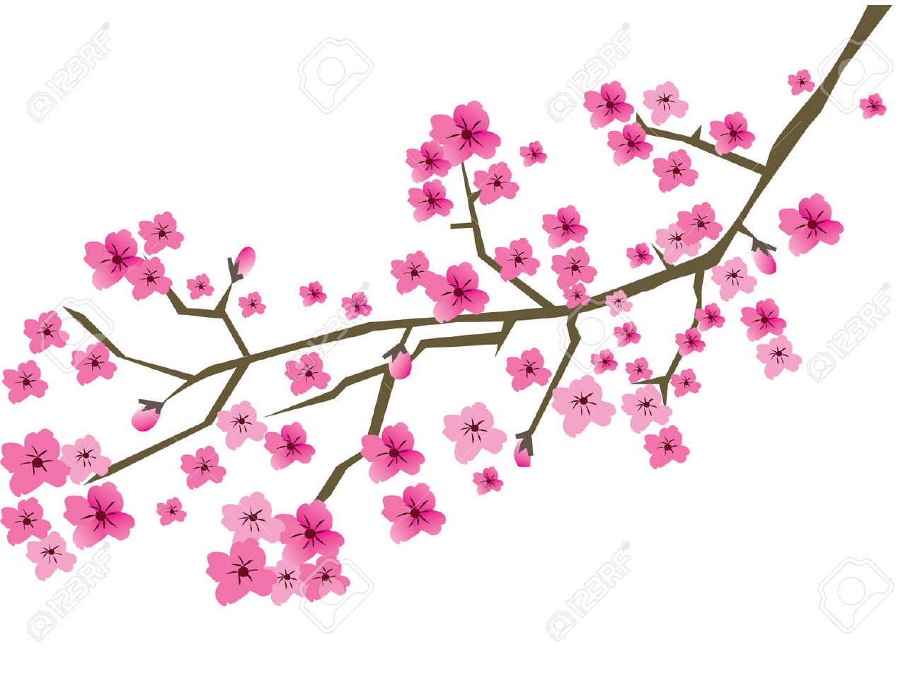 Vector Plum Blossom Branch Royalty Free Cliparts, Vectors, And.