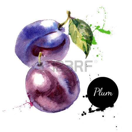 2,453 Plum Color Stock Vector Illustration And Royalty Free Plum.