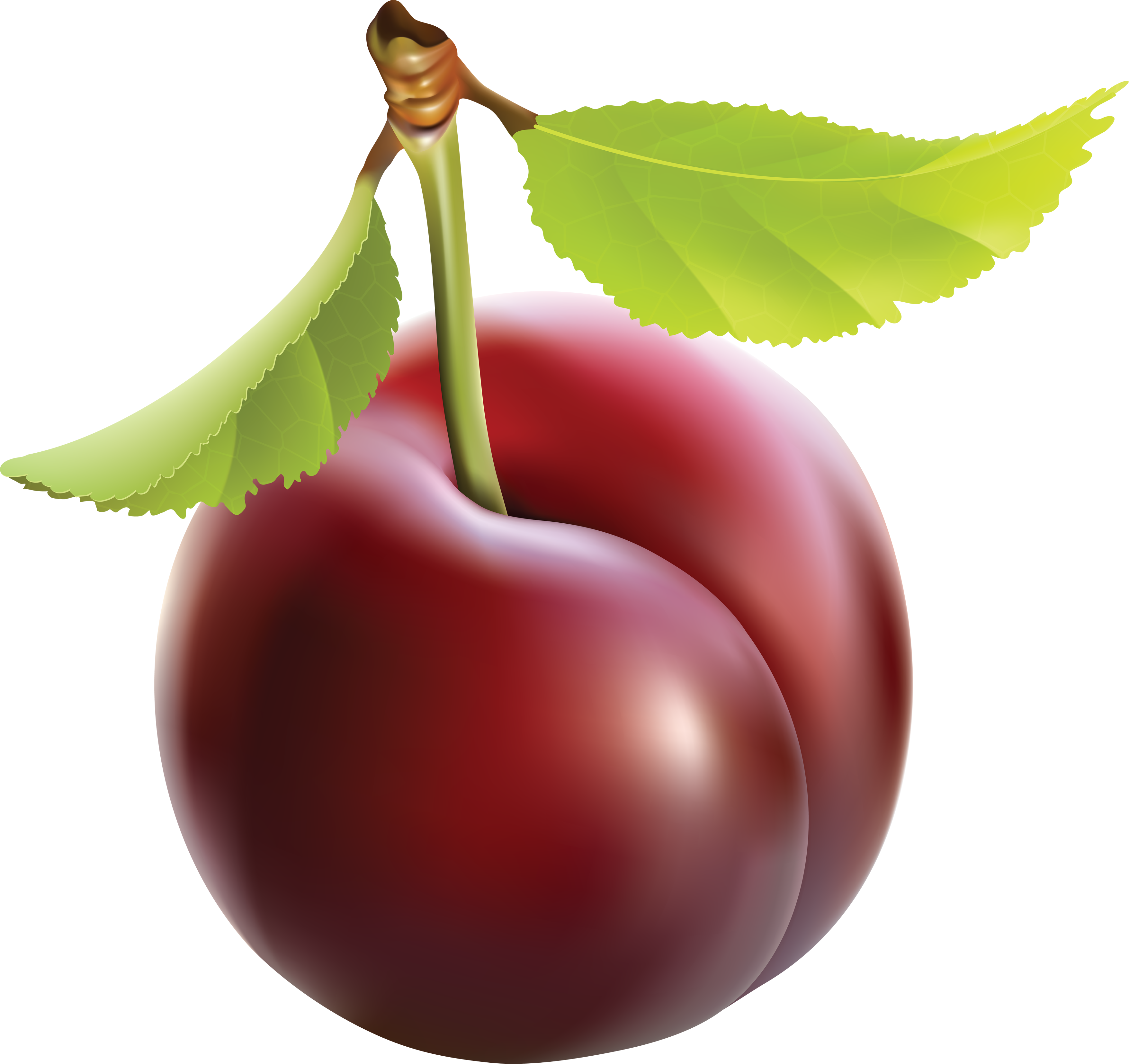 Clipart plum clipart images gallery for free download.