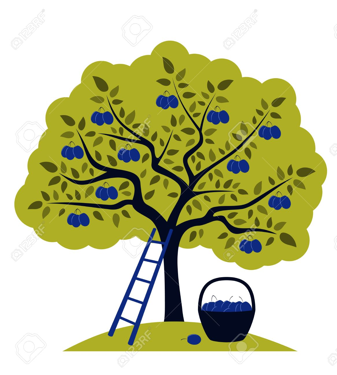 Vector Plum Tree, Ladder And Basket Of Plums Royalty Free Cliparts.