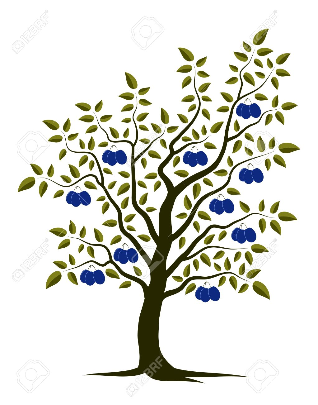 Vector Plum Tree On White Background Royalty Free Cliparts.