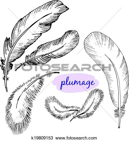 Clipart of Vector set of sketch plumage k19809153.