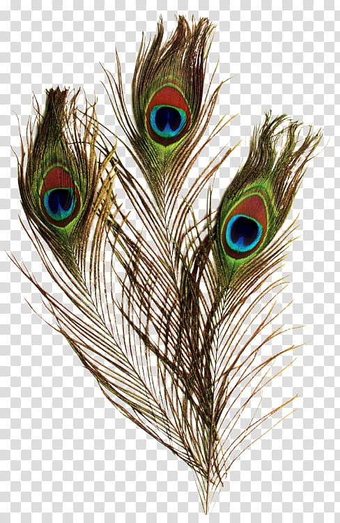 Plumas de Pavo Real transparent background PNG clipart.