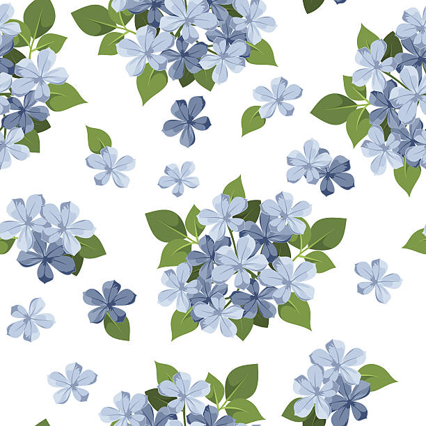 Plumbago Clip Art, Vector Images & Illustrations.