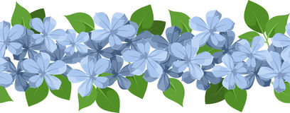Plumbago Stock Photos, Images, & Pictures.