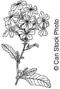 Plumbago Illustrations and Clip Art. 27 Plumbago royalty free.