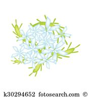Plumbago Clipart and Illustration. 12 plumbago clip art vector EPS.