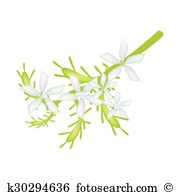 Plumbago Clipart and Illustration. 11 plumbago clip art vector EPS.
