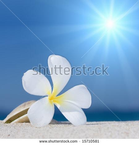 Tropical Flower Plumeria Alba And Seashell On The Sandy Beach.