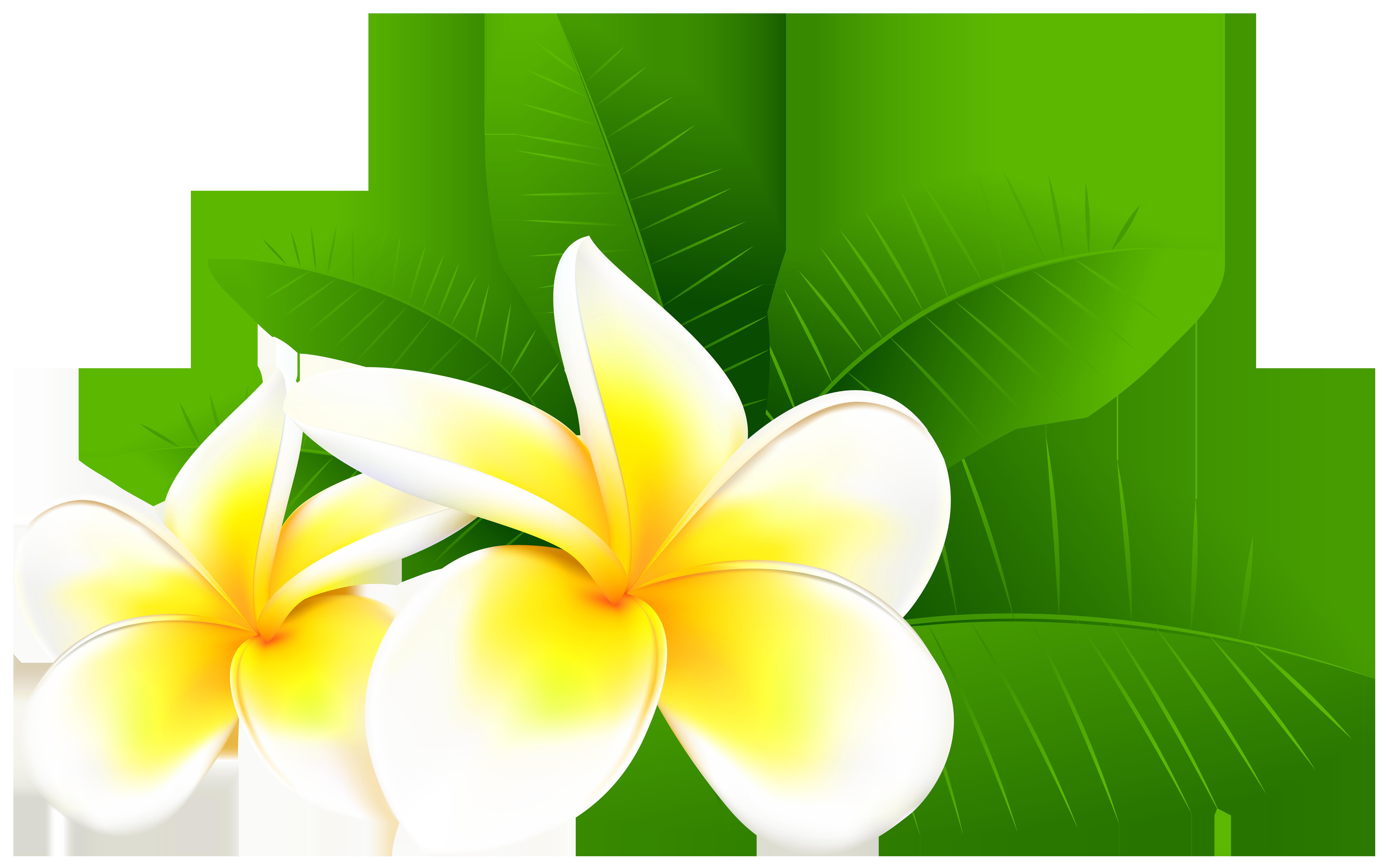 Exotic Plumeria PNG Clip Art Image.