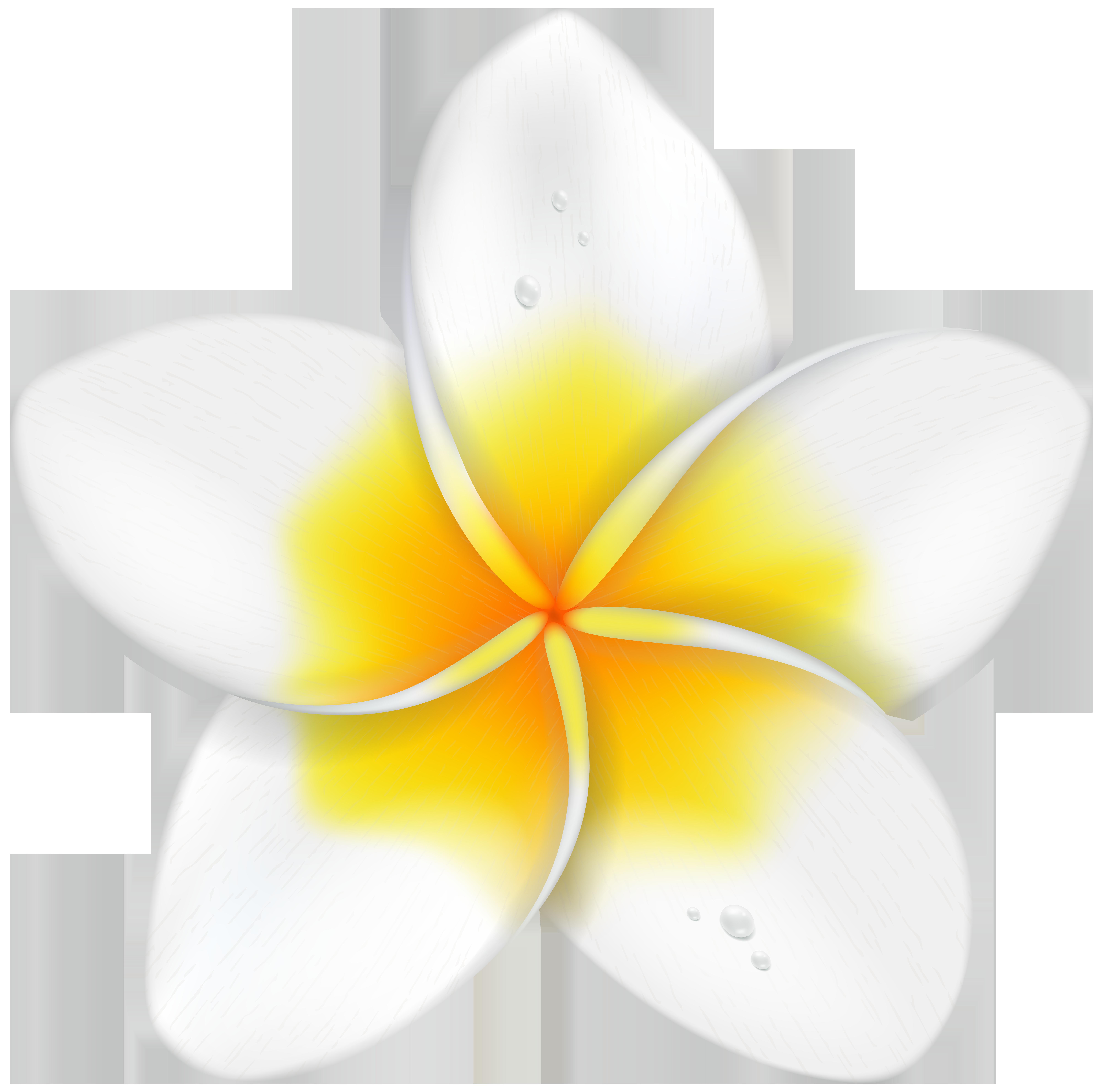 Exotic Flower Plumeria PNG Clip Art Image.