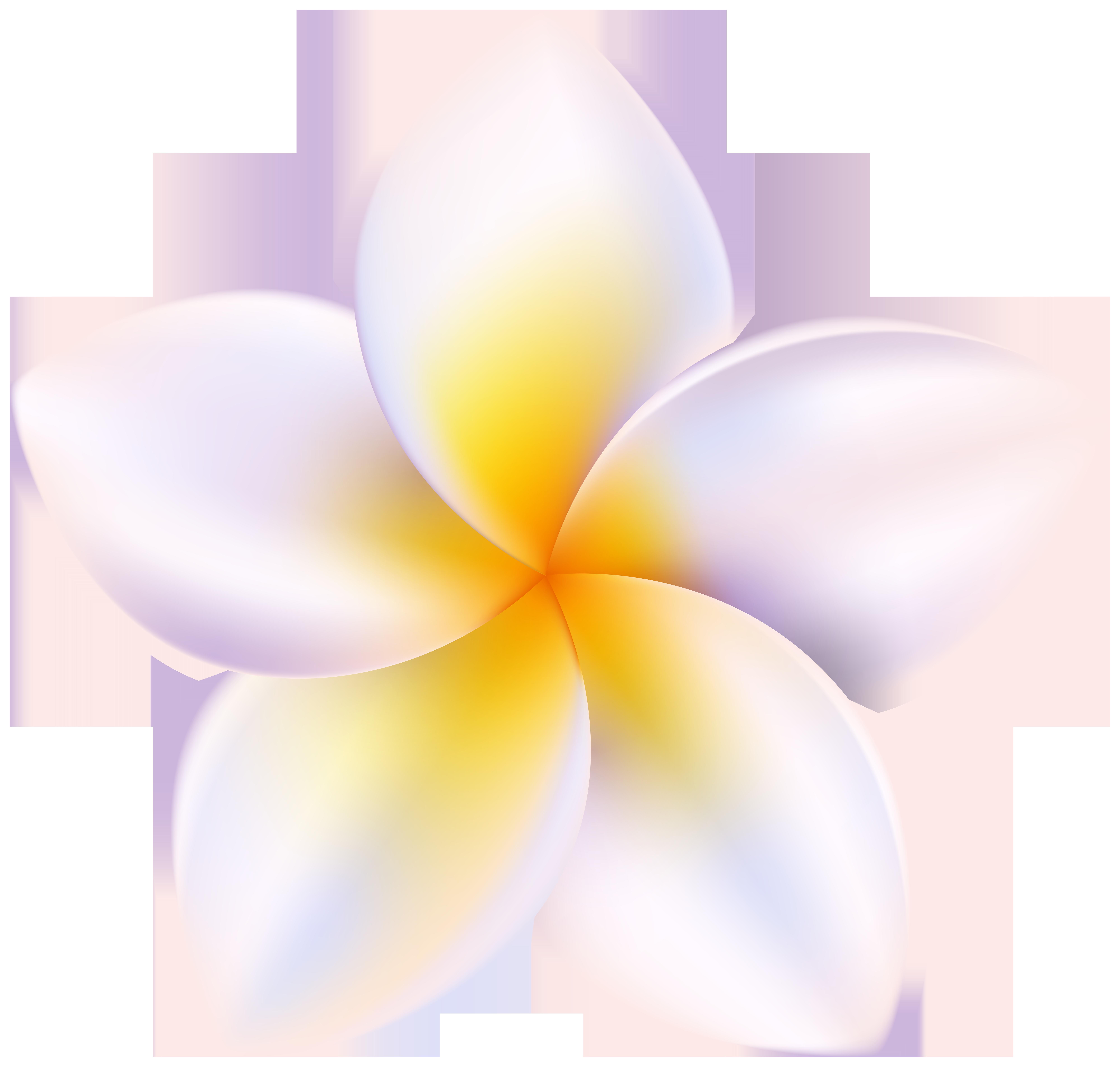 Plumeria PNG Clipart.