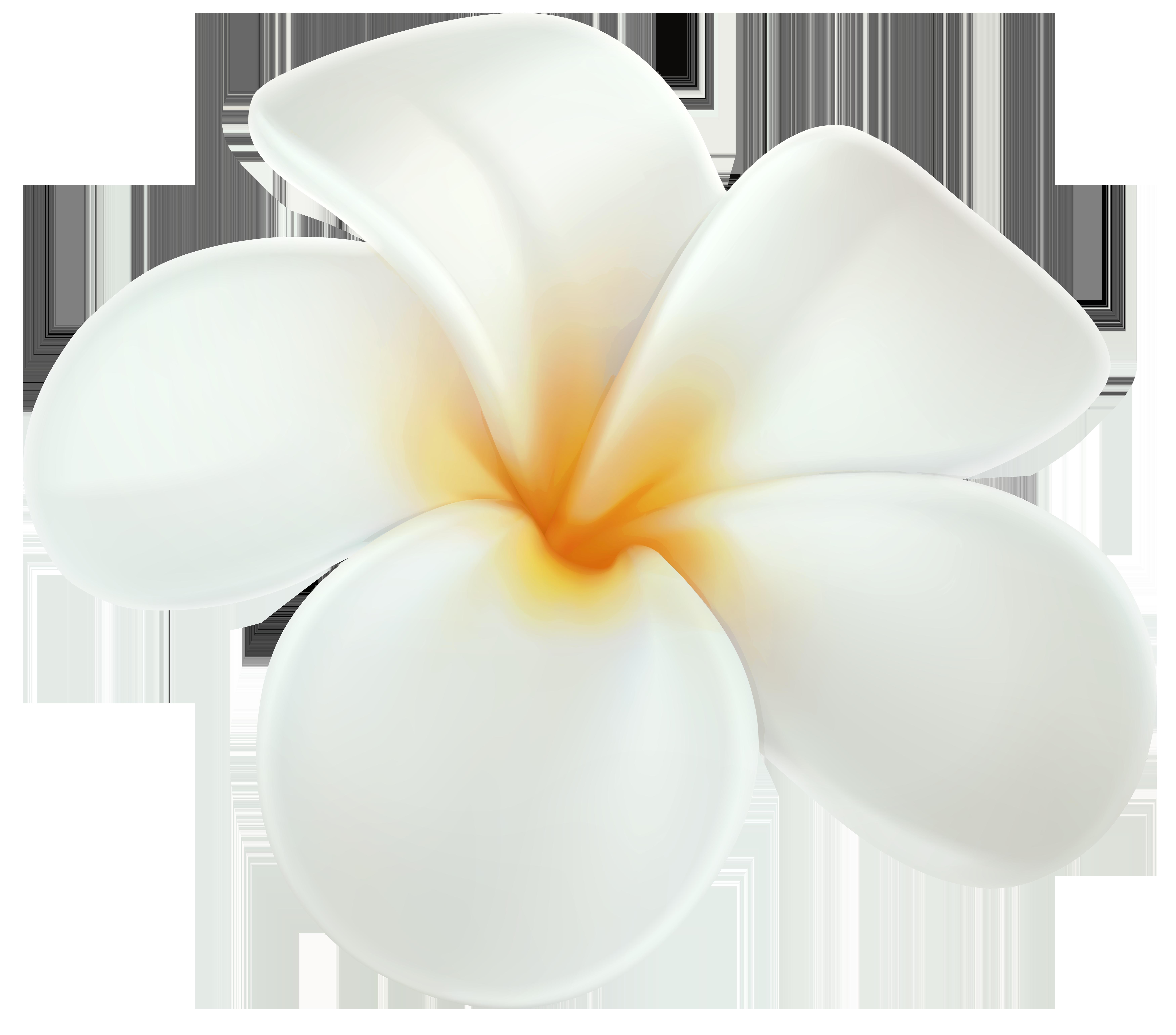 Plumeria PNG Clip Art.