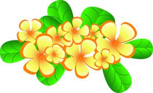 Free clip art plumeria flower.