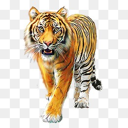 Tiger PNG Images, Download 1,805 Tiger PNG Resources with.