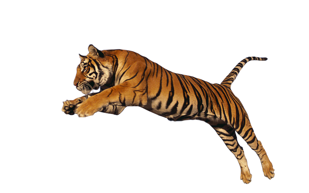 Animal PNG HD Transparent Animal HD.PNG Images..