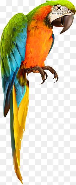 Parrot Bird Animal Vector Material, Anim #48497.