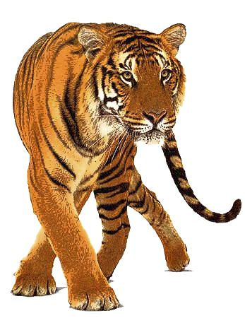 Animal PNG Transparent Animal.PNG Images..