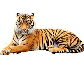 Animal png transparent image free download.