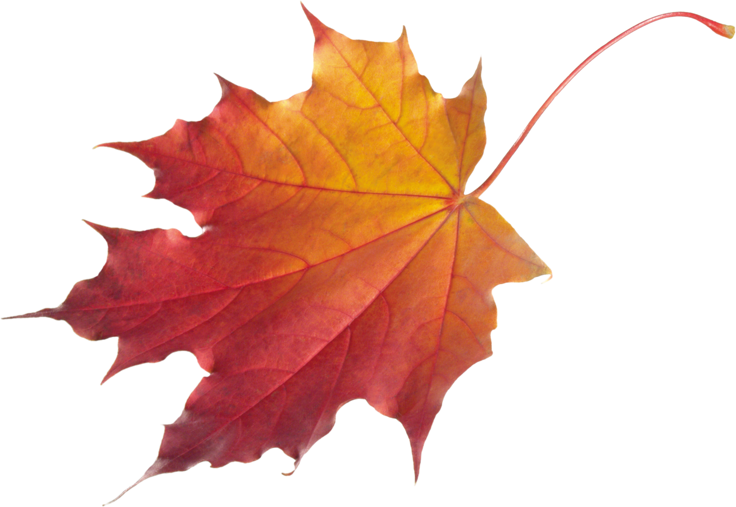 Autumn Leaves HD PNG Transparent Autumn Leaves HD.PNG Images.