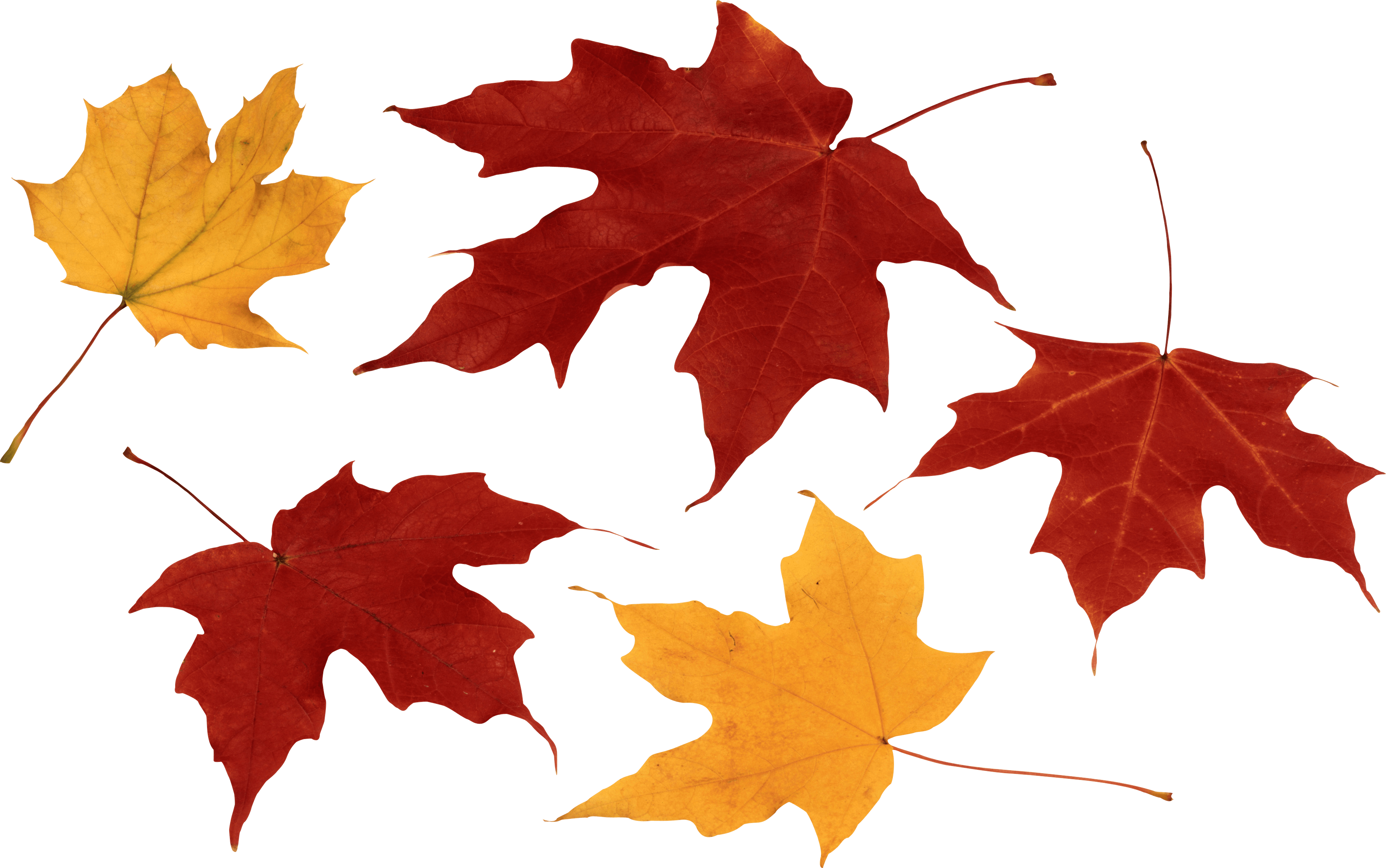 Autumn Leaves PNG Images Transparent Free Download.